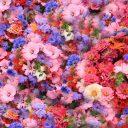 flowers_spring_park